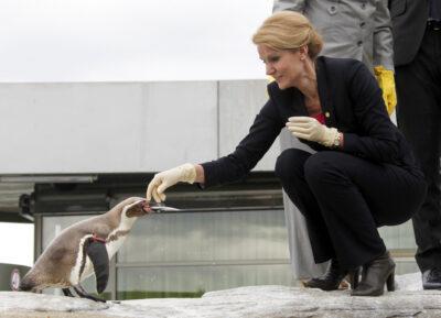 Premier Danii z pingwinem podczas spotkania Rady Państw Morza Bałtyckiego